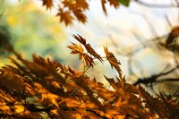 rsz_autumn-507544_1280