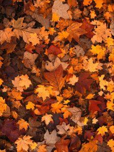 fall-foliage-111315_1280